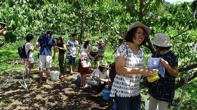 桃狩り食べ放題について教えて。山梨県(御坂町)「ファミリー農場さの」の口コミと評判